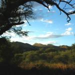 Mesquites, Rancho Aribabi - J. Rorabaugh