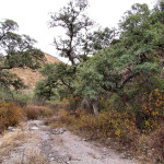 Oak savanna above casitas, Sierra Azul, Aribabi