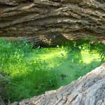 Rancho Aribabi cienega - J. Rorabaugh