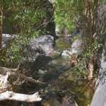 Stream at La Paloma, Rancho El Aribabi - J. Rorabaugh