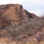 Dry season ocotillo, Sierra Azul, Rancho El Aribabi - J. Rorabaugh