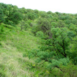 Oak woodlands, Sierra Azul, Son - J. Rorabaugh