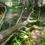 Rio Cocospera, Rancho Aribabi - J. Rorabaugh