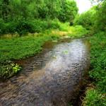 Rio Cocospera, Rancho el Aribabi - J. Rorabaugh