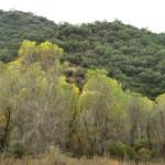 Rio Cocospera in Nov, Rancho El Aribabi, N Sonora - J. Rorabaugh