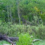 Rio Cocospera, riparian woodland - J. Rorabaugh