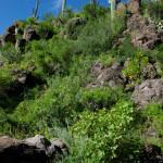 Rocky hillside2, Rancho Aribabi - J. Rorabaugh