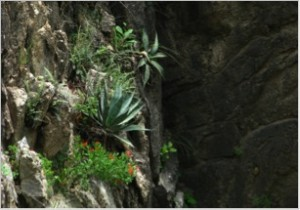 Figure 71. Diverse plants on the vertical walls of a canada of Arroyo Las Palomas.