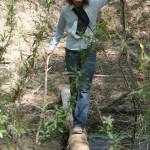 Tawsha fording the Rio Cocospera