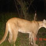 Mtn Lion Mes Hack cam2 (3)